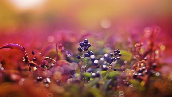 Blurred berries wallpaper