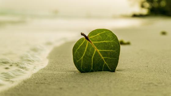 Green leaf in the sand wallpaper