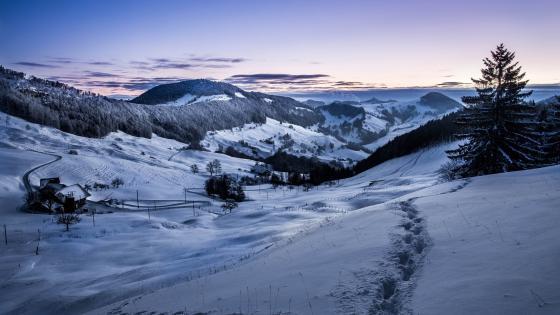 Blue winter dawn wallpaper