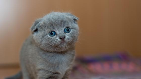 Adorable cat wallpaper