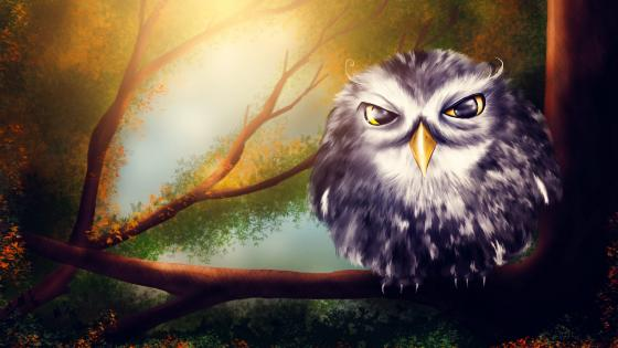 Owl sitting on a branch wallpaper