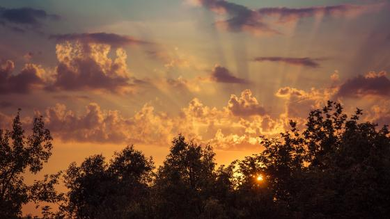 Sun rays above the trees wallpaper