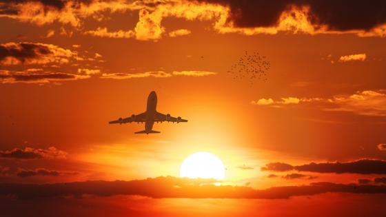 Airplane flying in the sunset wallpaper