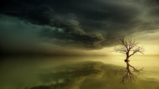 Lone tree in the water wallpaper