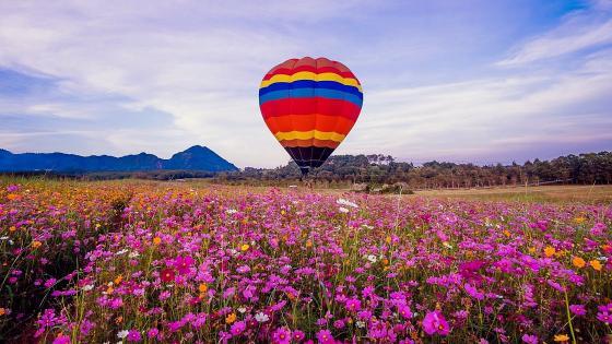 Hot air balloon on flowery meadow wallpaper