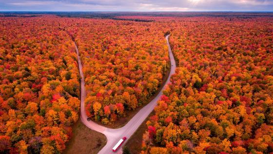 Michigan autumn forest wallpaper