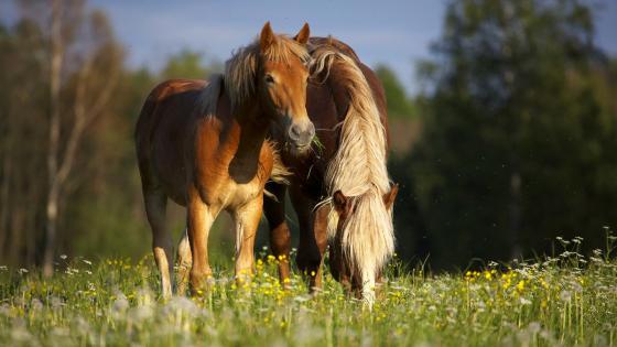 Horses 🐴 wallpaper