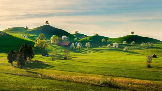 Spring landscape wallpaper