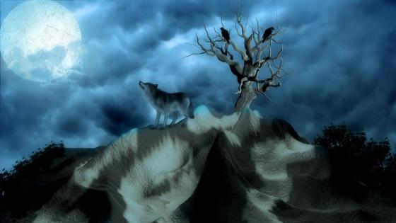 Wolf in the full moon wallpaper