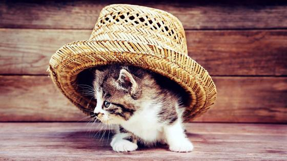 Cat with straw hat wallpaper