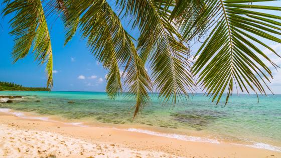 Sea and palm leaves wallpaper
