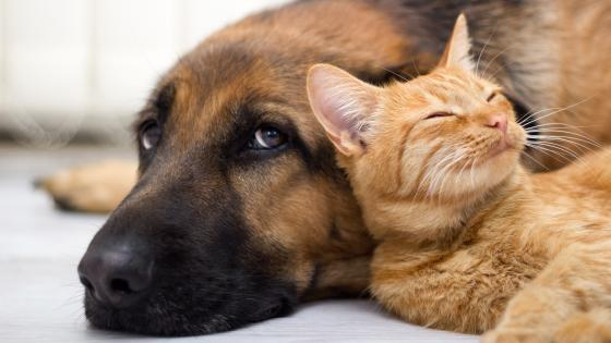 Cat rest in dog wallpaper