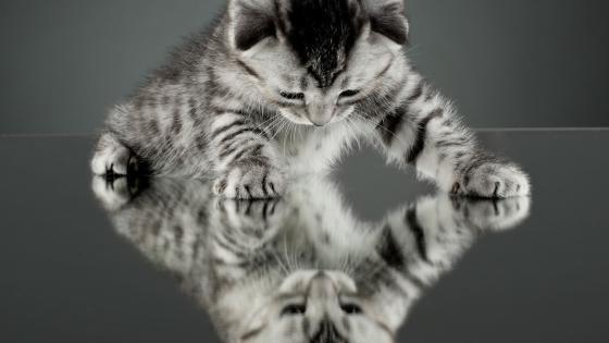 Kitten and a mirror wallpaper