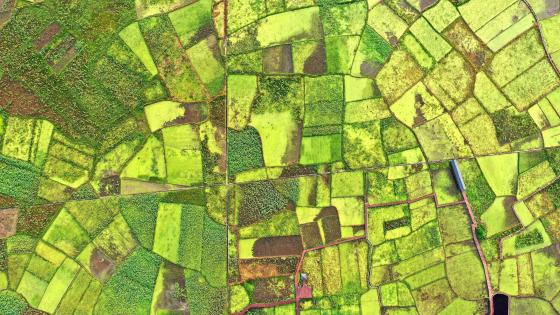 Aerial photography, early autumn, lotus field wallpaper