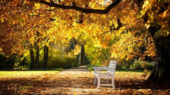 White bench in the autumn park wallpaper