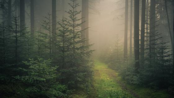Path in the Black Forest wallpaper