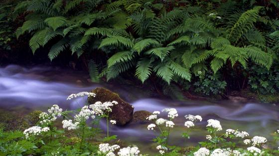 Stream Flowing Between Vegetation wallpaper