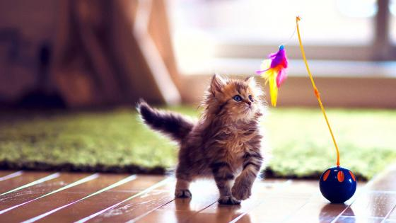 Cute kitten playing wallpaper