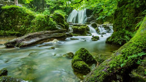 Mossy forest stream wallpaper