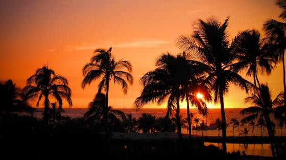 Palms silhouette at sunset wallpaper