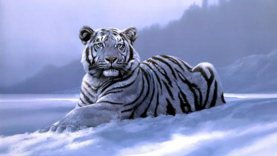 Resting white tiger wallpaper