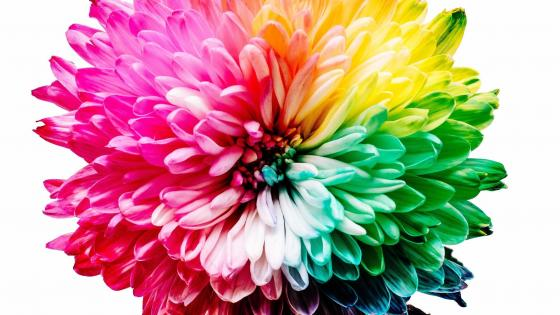 Colourful flower wallpaper