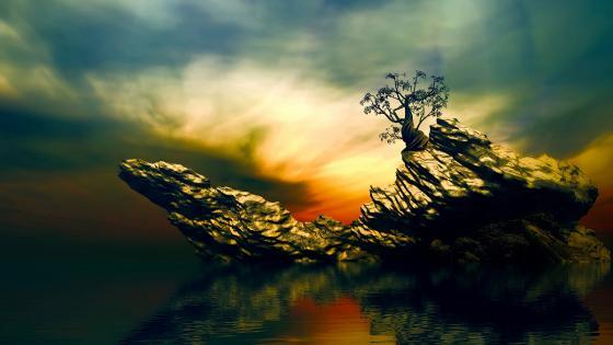 Lone tree on a rock wallpaper