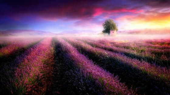 Blooming countryside in sunrise wallpaper