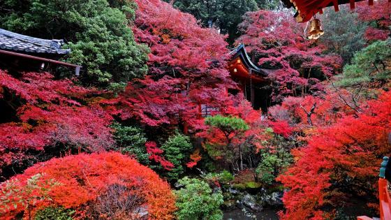 Temple in Kyoto wallpaper