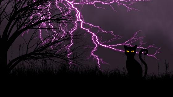 Black cat with lightning stirikes wallpaper