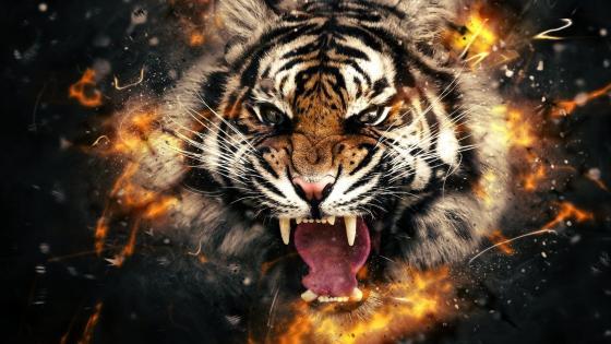 Roaring tiger wallpaper