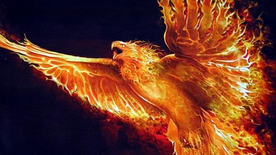 Fire phoenix wallpaper