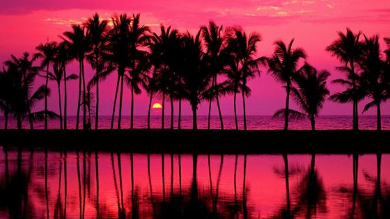 Hawaiian pink sunset over the beach wallpaper