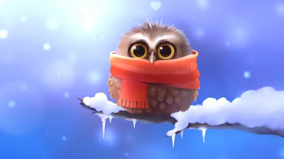 Little owl with scarf on a snowy branch wallpaper