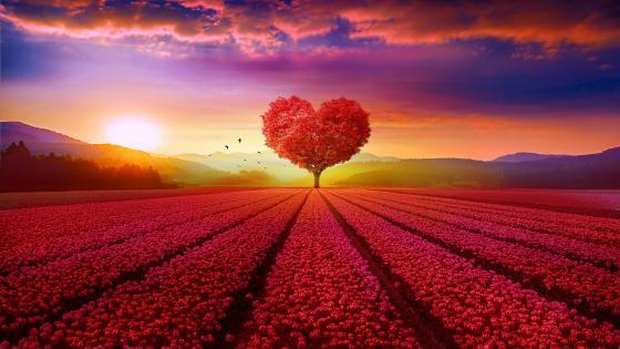 Heart tree wallpaper