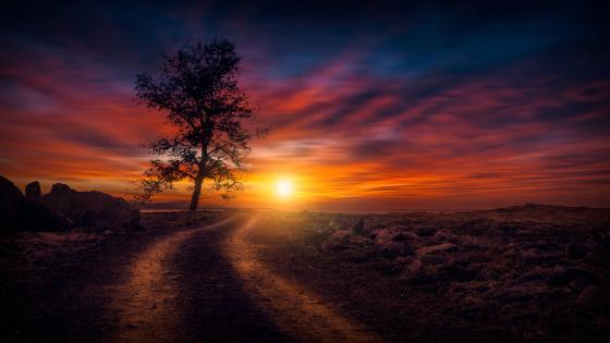 Dirt road at sundown wallpaper
