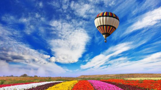 Balloon over the flower field wallpaper