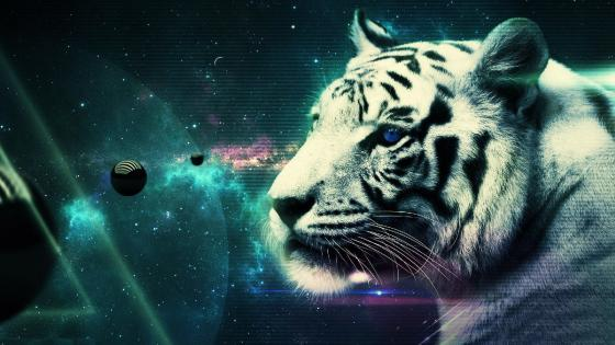Cool white tiger wallpaper