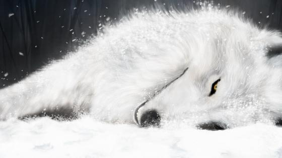 White wolf drawing wallpaper