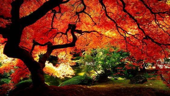 Autumn tree in the park wallpaper