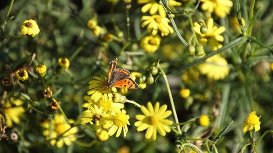 Butterfly in the autumn wallpaper