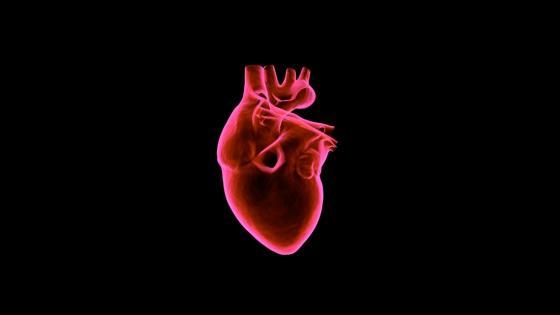 Muscular heart wallpaper