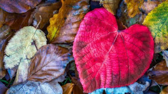 Natural heart shape wallpaper
