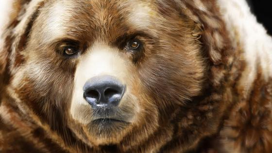 Bearish Grizzly bear face wallpaper