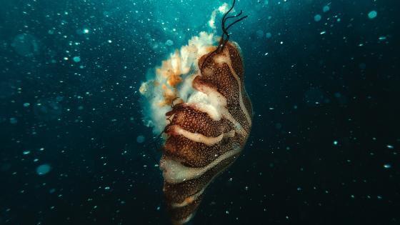Jellyfish near bubles wallpaper