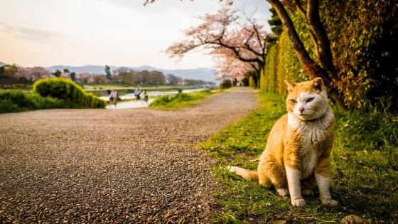 Cat in the park wallpaper
