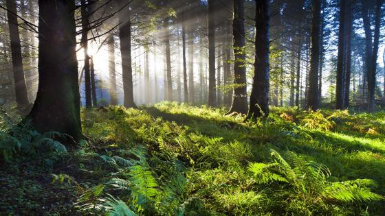 Forest sunlight wallpaper
