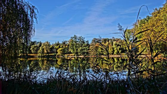 Wittringen lake at fall wallpaper