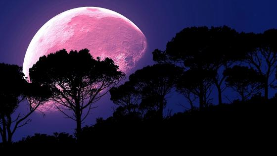 Full Strawberry Moon Among Trees wallpaper