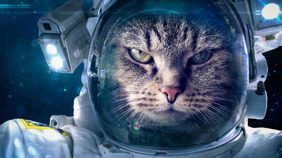 Astronaut cat in the space wallpaper